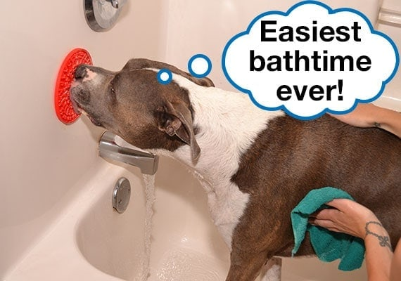 Washing a Pitbull in bathtub by hand while he keeps calm by licking a lick mat