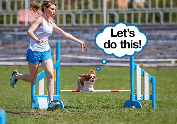 Woman exercising by jogging along side her Cavalier King Charles Spaniel for exercise as dog completes agility course