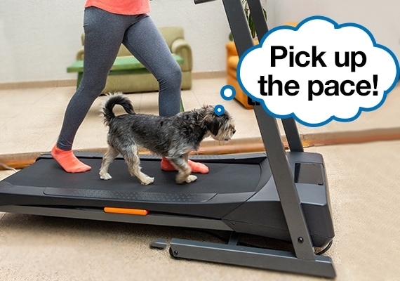 Woman exercising on treadmill with small dog walking alongside her