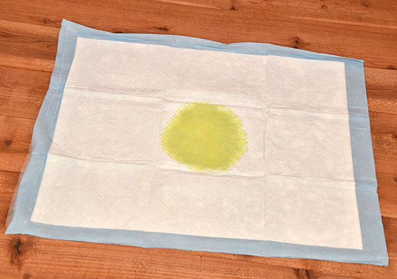 Yellow dog urine sitting in middle of Kirkland Signature Extra Large Abrobent Pad - Best Large Pee Pad For Dogs Winner