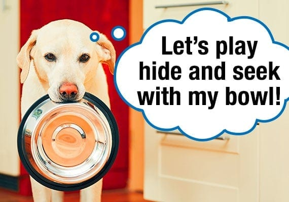 Yellow Labrador carrying stainless steel dog bowl in his mouth