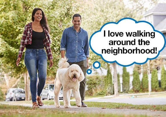 Young couple exercising by walking dog on neighborhood streets