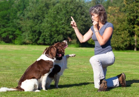 dog trainer blowing whistle to teach dogs to high five