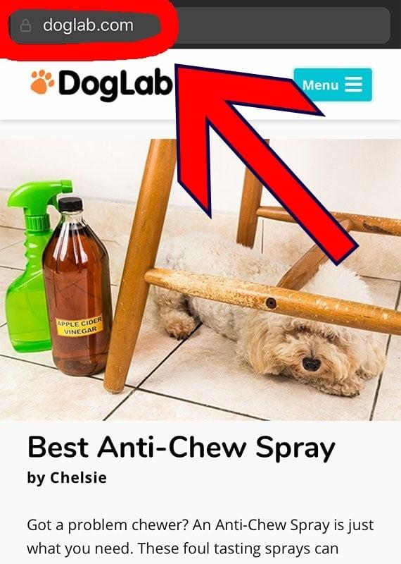 DogLab Website