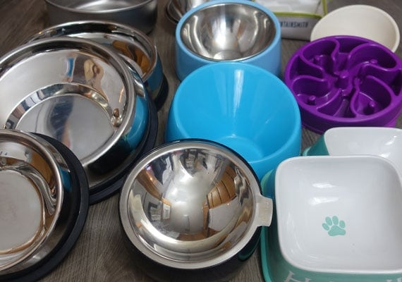 Flat-faced dog bowls ready for testing