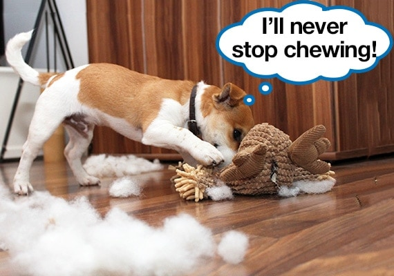 Puppy chewing a plush toy and pulling out pieces of stuffing