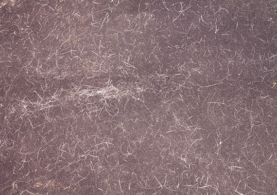 Thousands of small dog hairs stuck to surface of couch