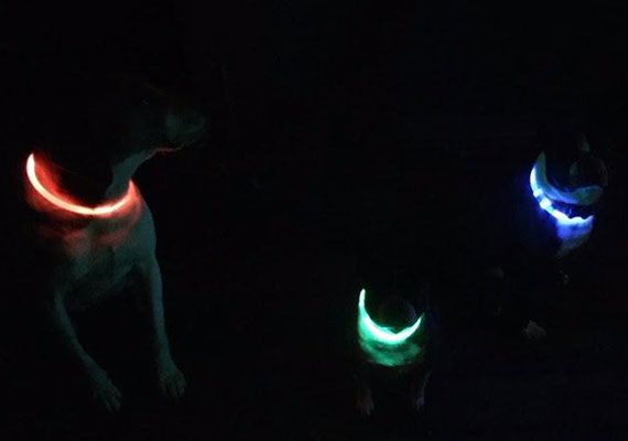 Three different dogs at dog park wearing different colored bright LED collars