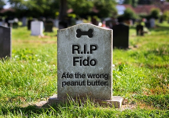 Tombstone of dog that died after eating peanut butter with xylitol