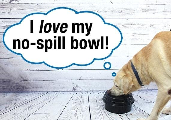 Yellow Labrador loves his no-spill dog bowl